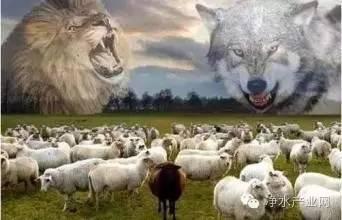 [需求]两群羊的选择,此生必读!-行业动态即时报