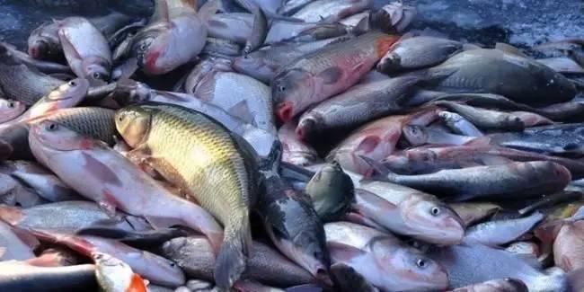 [需求]四川德阳4家商户池里鱼离奇死亡疑为水质出问题-行业动态即时报