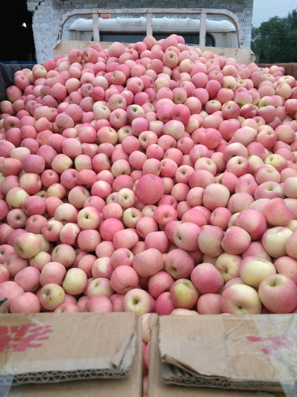 来自马正林发布的供应信息:陕西扶风苹果以脆.甜.色泽红亮而出名,以... - 陕西苹果韶关专卖