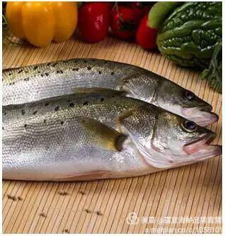 来自蔡丹萍发布的公司动态信息:... - 嘉宜海鲈鱼